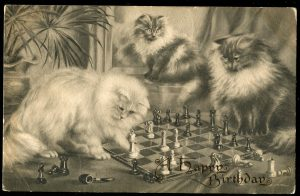 chess cat echecs chat